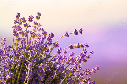 Deurstickers Lavendel Lavender flowers bloom summer time