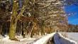 Weg am Winterwald vid 03