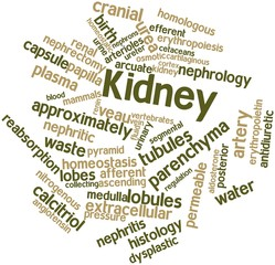 Word cloud for Kidney