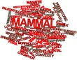 Word cloud for Mammal