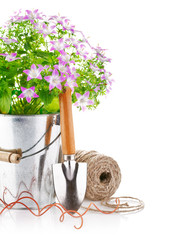spring flowers in a bucket with garden tools isolated on white