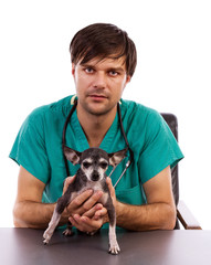 Young veterinarian doctor holding a chihuahua dog
