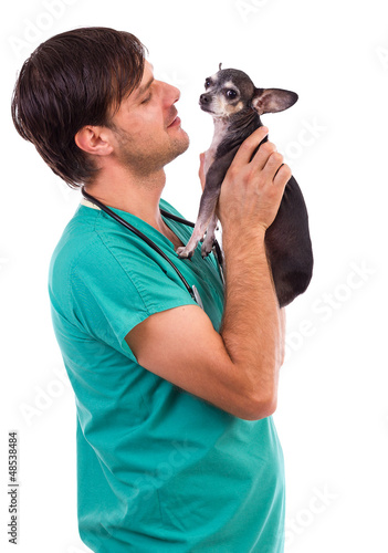 Veterinarian doctor holding a  chihuahua dog