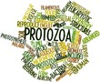 Word cloud for Protozoa