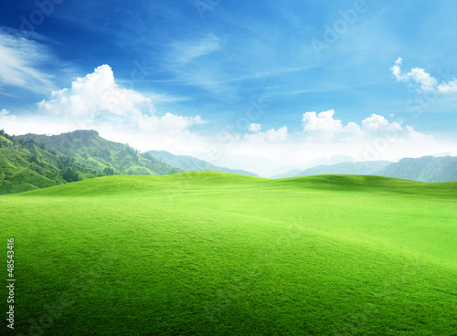 field of grass in mountain