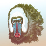 Enchanted mandrill