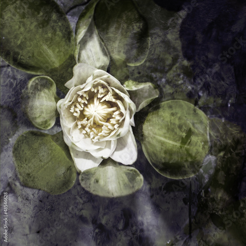 Vintage water lily background