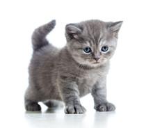 Niedliche Katze Kitty isoliert auf weißem