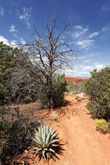 Sedona trail