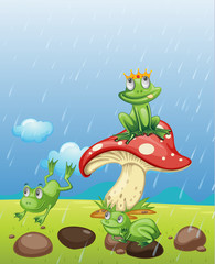 Frogs playing in the rain