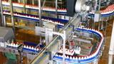 bottles yogurt move long zigzag conveyor at factory poster