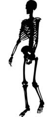single silhouette of human skeleton