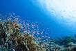 Leinwanddruck Bild - 海底に舞う小魚の群れ