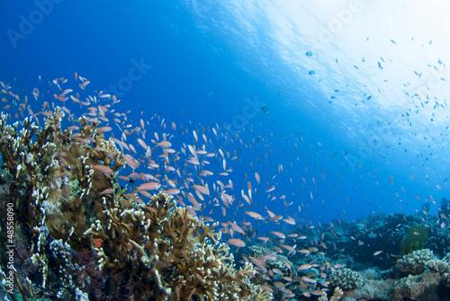 Leinwanddruck Bild 海底に舞う小魚の群れ