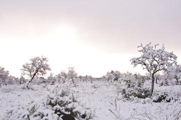 Amanecer nevado