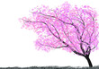 Tree with pink blosssom  and Grass silhouette