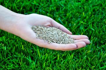 grass seeding - woman hand holding grass seed