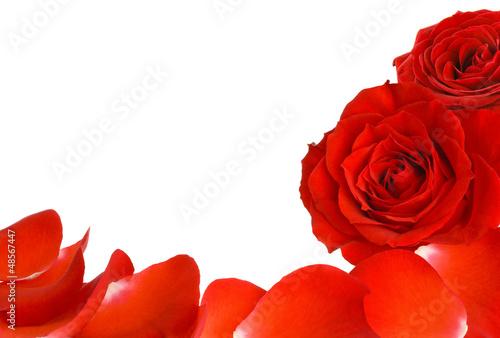 Rahmen aus zwei Rosen und Blütenblättern