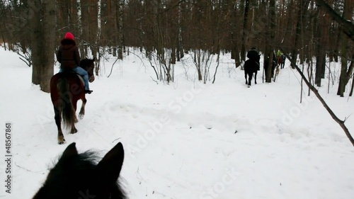 Several people ride horseback in forest