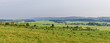 Panorama with polish meadows