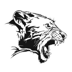 Tiger feral