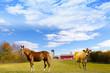 American Countryside Red Barn