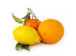 Citrus fruits on white background: mandarin, lemon and orange