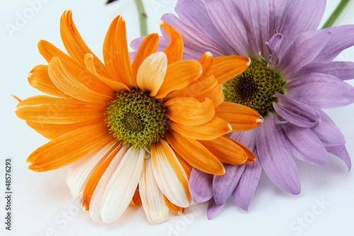 Beautiful Purple & Orange Flowers