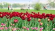 People walk near pond, focus is on flowerbed at foreground