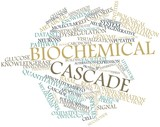 Word cloud for Biochemical cascade poster