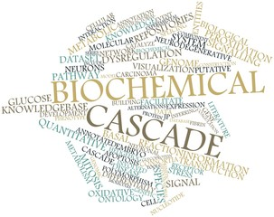 Word cloud for Biochemical cascade