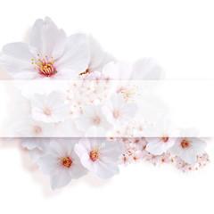 桜 中心コピースペース