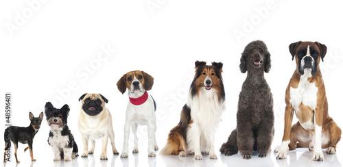 Pedigree dogs - Rassehunde