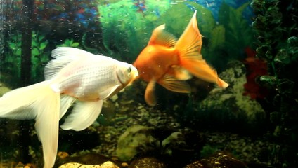 Magic swimming fish