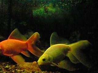 Fish swims slowly