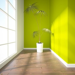 green empty interior with palm