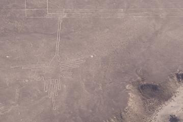 Colibrí, Líneas de Nazca (Perú)