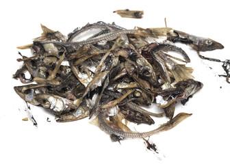 smoked fish capelin