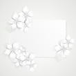 Floral Background with white flowers- Sfondo con fiori bianchi