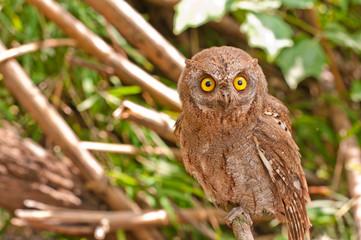 A portrait of an eagle owl