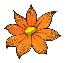 An orange flower