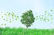 樹木と葉っぱ