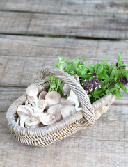 Basket of mushroom, sweet basil and coriander leaves