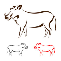 Vector image of an boar on white background