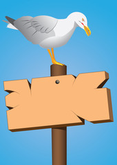 seagull on the marine cartel