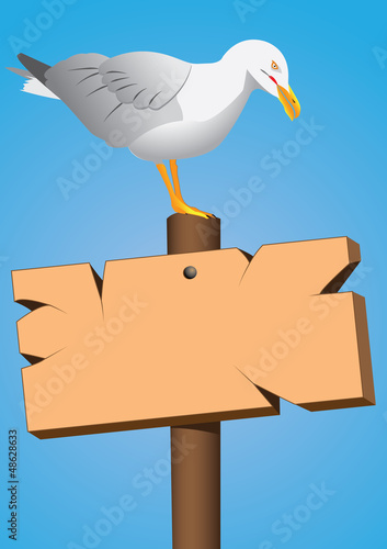 seagull on the marine cartel