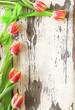 nostalgischer Rahmen aus Tulpen