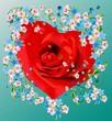 serce róża
