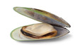 New Zealand green lipped mussel
