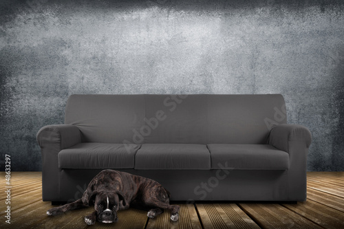 cane sdraiato vicino al divano